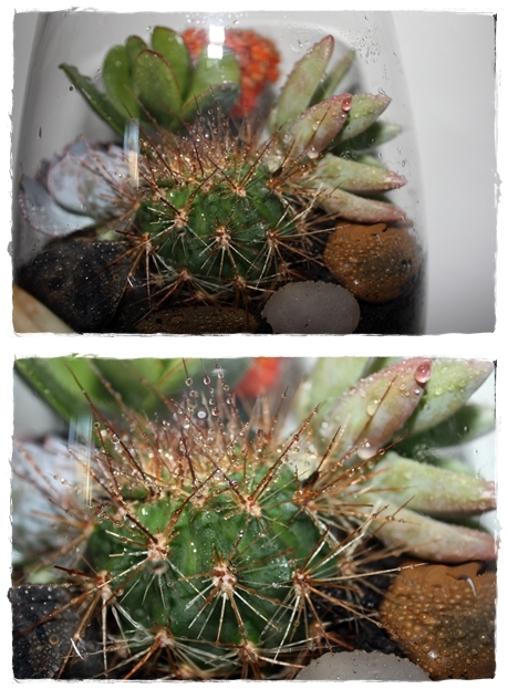 cacti Make! Make your own Terrarium