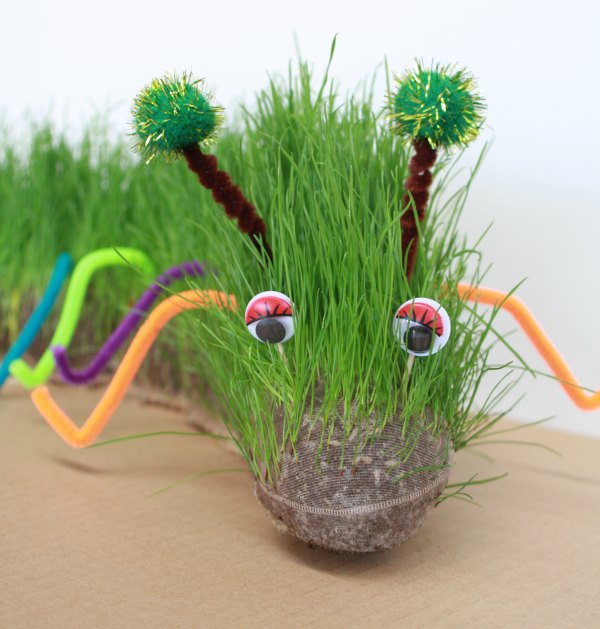 Grow your furry pet caterpillar