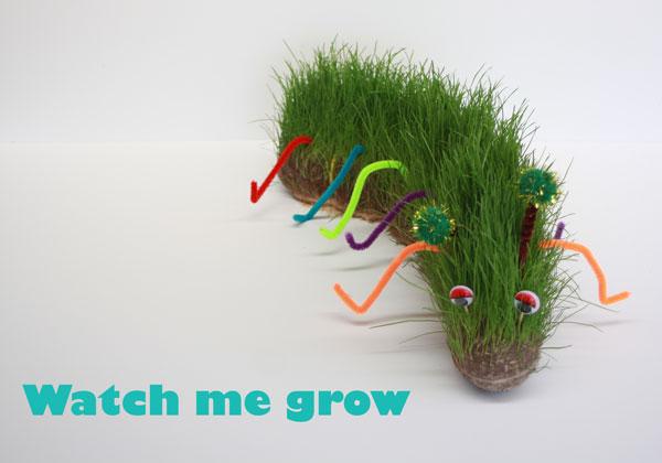 Watch-your-caterpillar-grow